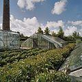 Overzicht van ijzeren druivenserre (kniekas) - Honselersdijk - 20405439 - RCE.jpg