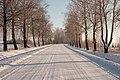 P94 aleja ziemā.jpg