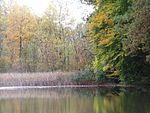 PA210029 Fernwood NP Pond Autumn 2005.JPG