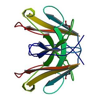 Tropomyosin receptor kinase A