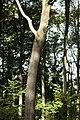 PM 112976 B Koppenberg.jpg