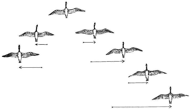 File:PSM V84 D217 2 Flocking habit of migratory birds fig5.jpg
