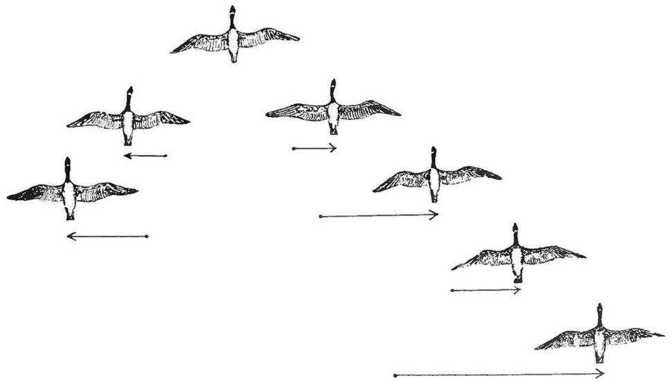 PSM V84 D217 2 Flocking habit of migratory birds fig5