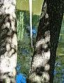 Palanga Botanical Park. Reflections and Shadows. 2018(2).jpg