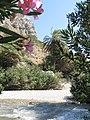 Palm forest of Preveli, 051140.jpg