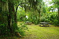 Palmetto-islands-park-picnic-area-sc1.jpg