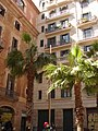 Palmtrees in the district of El Borne, Barcelona (4480716795).jpg