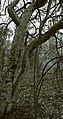 Paper tree (6215758168).jpg