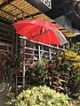 Parasol Hanged on Outdoor Stand for Protecting Plant 20171005.jpg