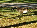 Parc Montcalm-Tache - 08.jpg