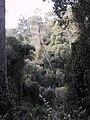 Parc de Vallvidrera 175-7558 IMG.JPG