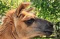 """Parcul de Animale - """"Moara de Vant"""" (7403417680).jpg"""