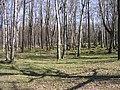 Park Koplis - panoramio.jpg