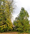 Parkansichten Queen-Auguste-Victoria-Park (Umkirch) jm54416 ji.jpg