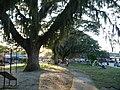Parque Lineal. Cartago, Valle, Colombia.JPG