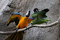 Parrots at Jungle Island theme park -Miami -USA-8a.jpg