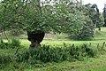 Pasture Near Balavil - geograph.org.uk - 530177.jpg