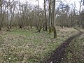 Path through the woodland - geograph.org.uk - 1740802.jpg