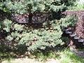 Pavilion of cones 14.JPG