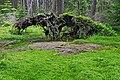 Pavlova Huť Nature Reserve (CZE).jpg