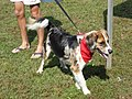 Paws in the Park-2-1.jpg