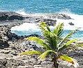 Paysage Atlantique Presqu'île de la Caravelle.jpg