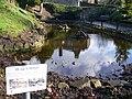 Peak's Pond - geograph.org.uk - 1194894.jpg