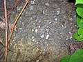 Pedogenic breccia (Conemaugh Group, Upper Pennsylvanian; creek cut on the western side of Caldwell, Ohio, USA) 3.jpg