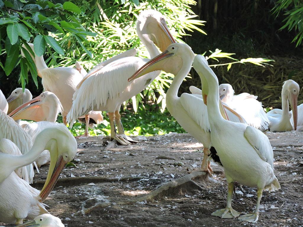 Places to visit in Assam: Assam State Zoo cum Botanical