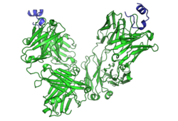 Peptide bound to Rituximab FAB.png