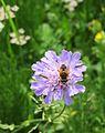Pflanze und Insekt zur Bestimmung.jpg