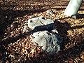 Pietra con coppelle alle falde del Monte Ciabergia.jpg