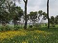 PikiWiki Israel 51945 galilee view.jpg