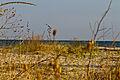 Plaja Vadu.jpg
