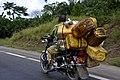 Planteur transportant les bidons d'huile.jpg