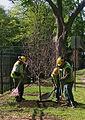 PlantingStreetTrees - Flickr - USDAgov.jpg