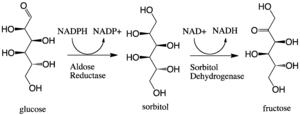 Aldose reductase - Image: Polyol Pathway