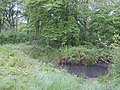 Pond in Marks Hill Wood - geograph.org.uk - 414603.jpg