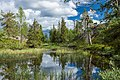 Pond in boreal forest of Kivitunturi, Savukoski, Lapland, Finland, 2021 June.jpg