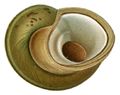 Potamolithus rushii shell 2.png