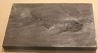 <i>Potanichthys</i> species of fish (fossil)