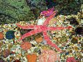 Pretty Starfish.jpg