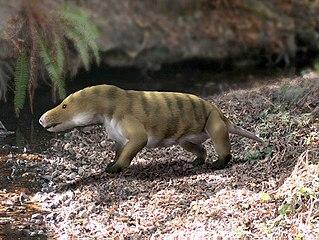 <i>Probainognathus</i> Genus of probainognathian cynodonts