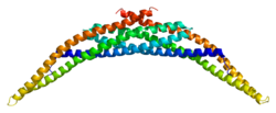 Protein ARFIP2 PDB 1i49.png