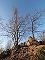 Quackenschloss Bäume 2140173.jpg