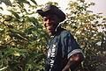 Récolte du coton à El Carmen - Pérou 10.JPG