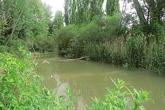 Río Riaza en la provincia de Burgos.jpg