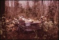 REMAINS OF A SUMMER COTTAGE WHICH COLLAPSED UNDER THE WEIGHT OF THE WINTER'S SNOWS - NARA - 554437.tif