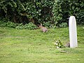 Rabbits in the churchyard of St Mary Magdalene C of E Tower, Friston - geograph.org.uk - 1436305.jpg