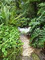 Rainforest Biome @ Eden Project (9757462236).jpg